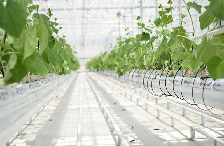 Сайт фермерских продуктов
